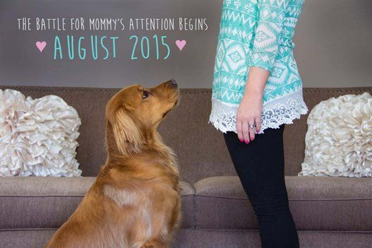 50 Adorable Dogs Who Shared Their Family's Pregnancy News In The Best Way