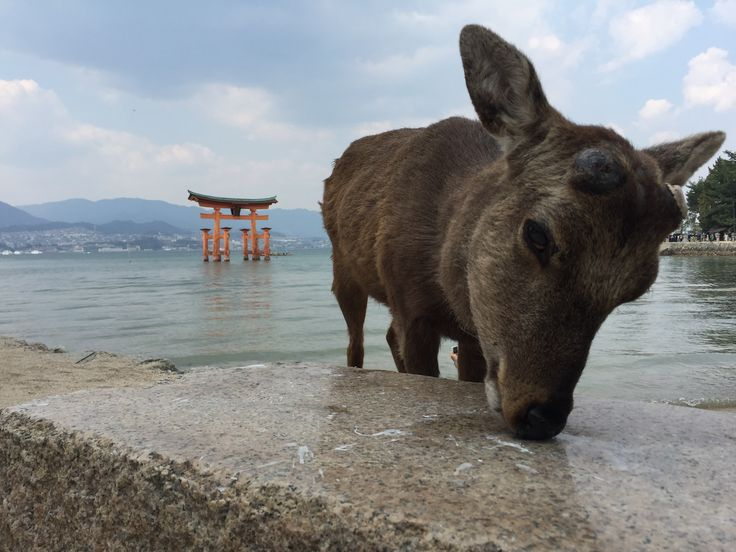 Itsukushima. [3264x2448]