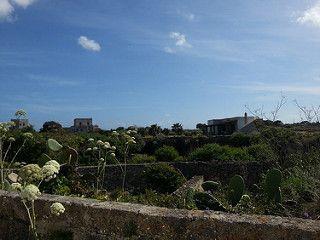 Isola di Favignana - paesaggio tipico della pianeggiante campagna favignanese, disseminata di giardini ipogei che tengono alberi e piante al riparo dal forte vento | da Lorenzo Sturiale