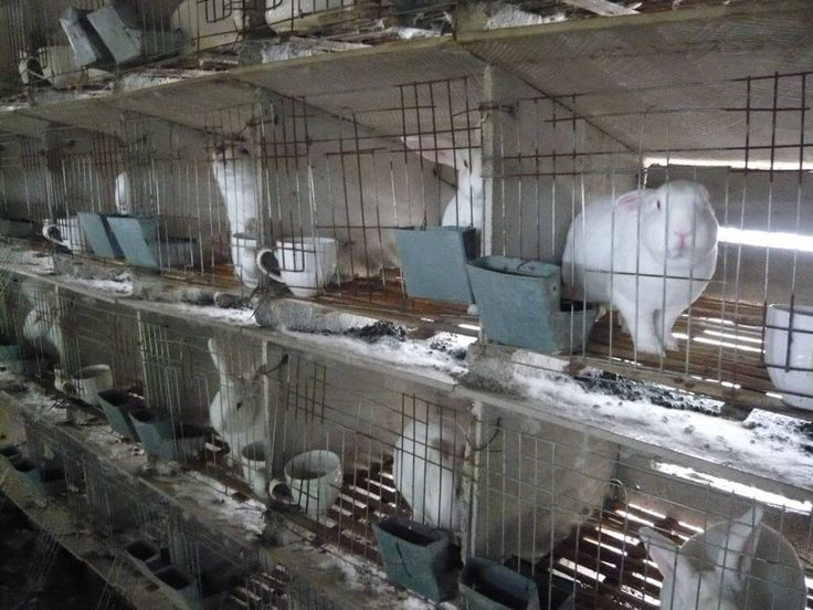 Companies are still trying to push cruel fur—despite knowing that animals pay the ultimate price for it. Why would anyone …