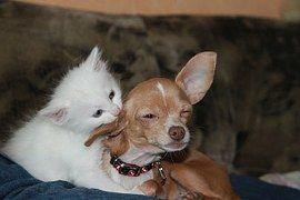 Animales De Caza, Perro, Gato