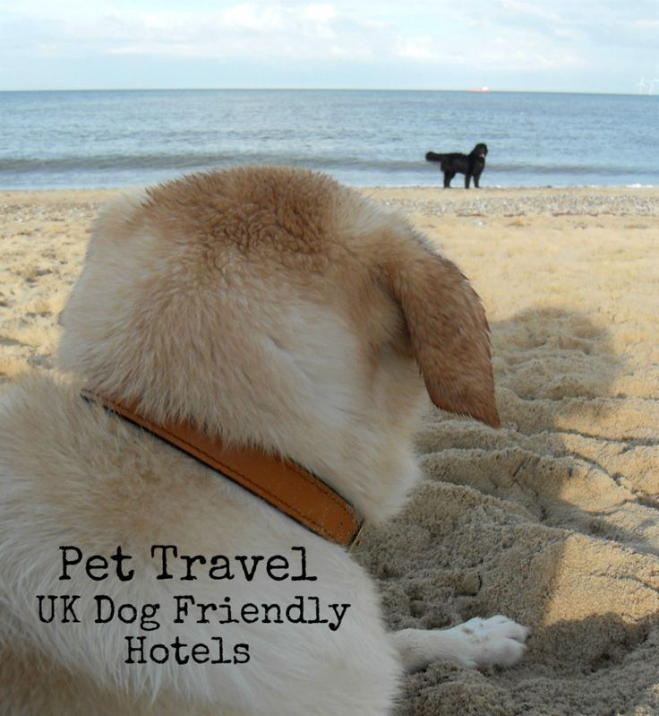 Pet Travel – UK Dog Friendly Hotels