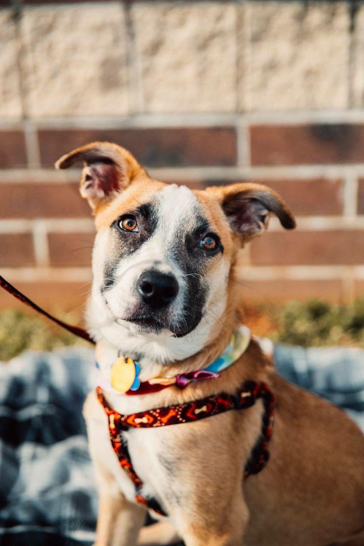 Adopt Hurley on Dog adoption, Dogs, Dog cat
