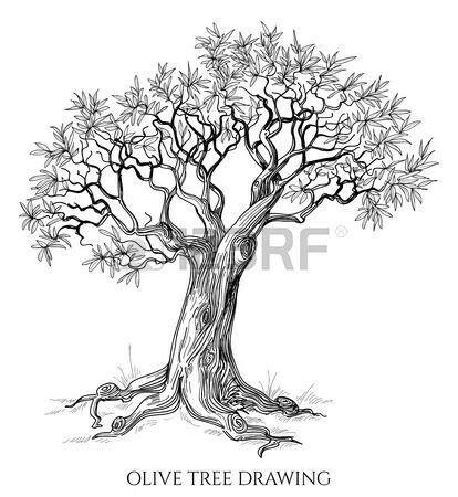 Olive tree tattoo