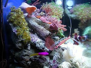 The Beginner's Guide to Saltwater Tank Filtration Systems: 5.5 gallon Reef Tank