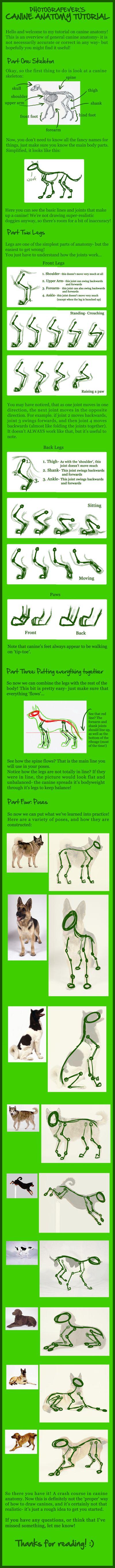 Basic canine anatomy