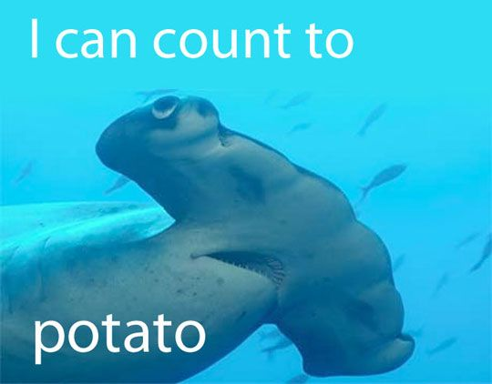 What I think when I see a hammerhead shark: Funnies Pictures, Sharksst Rayssawfish, Mouth Sharks, Funnies Sharks, Sharks Mouth, Potatoes Sharks, Funnies Hammerhead Sharks Ey, Funnies Stuff, Amazing Sharks