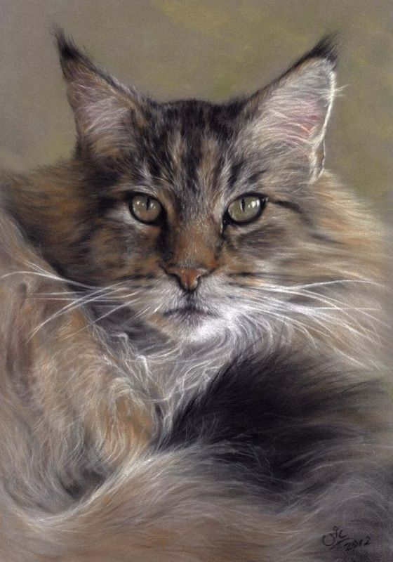 """Maine Coon"" pastel painting by Vic Bearcroft, English artist, cat-lover & rescuer, b.1956"