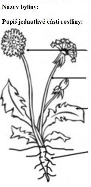 popis stavby rostliny