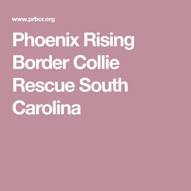 Phoenix Rising Border Collie Rescue South Carolina