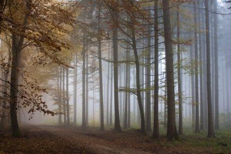 Bosque.