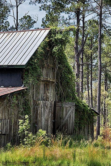 Orton Plantation Barn by Priscilla Burgers