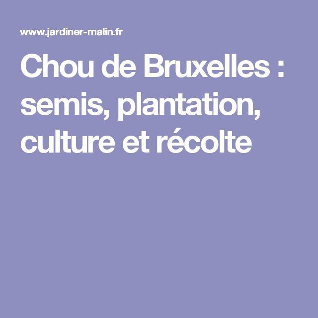 Chou de Bruxelles : semis, plantation, culture et récolte