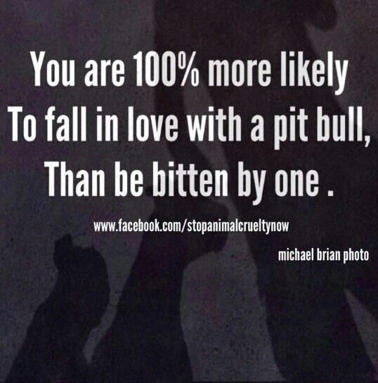You are 100% more likely to fall in love with a pit bull than be bitten by one.