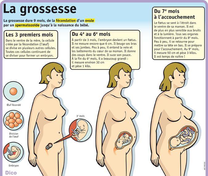 Fiche exposés : La grossesse