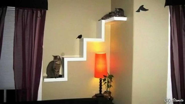 Cool Cat Friendly Homes