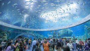 The biggest aquarium in the world, Chimelong Ocean Kingdom