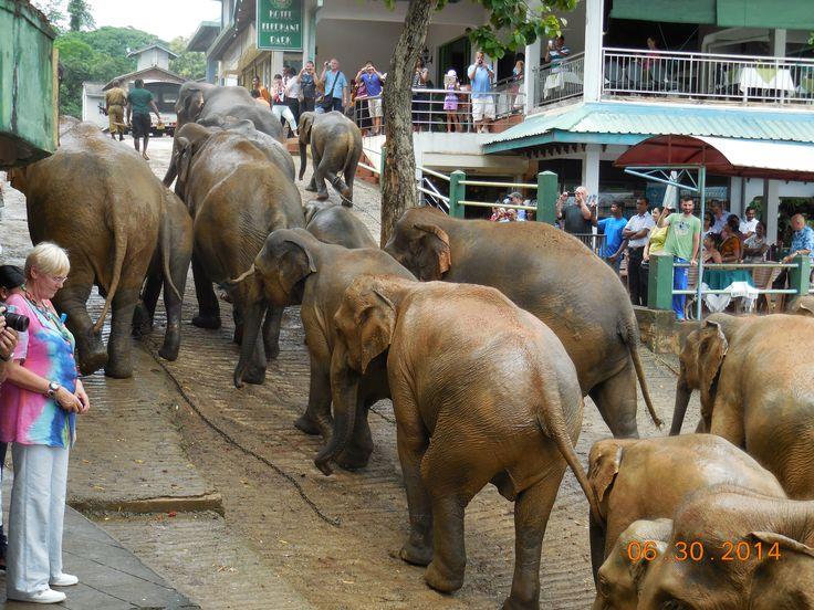 Pin By Luthuu On Let S To Go Sri Lanka Sri Lanka Sri Lankan Animals