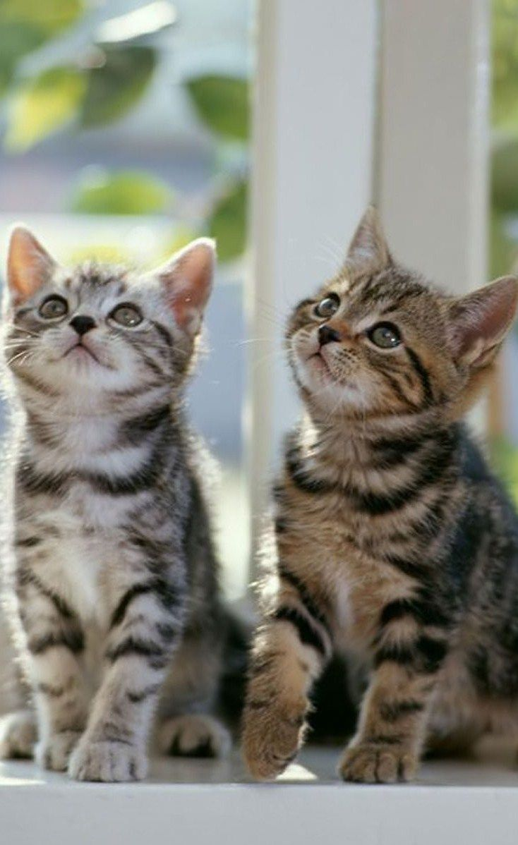 1689 best kitten caboodle cats images on pinterest animals