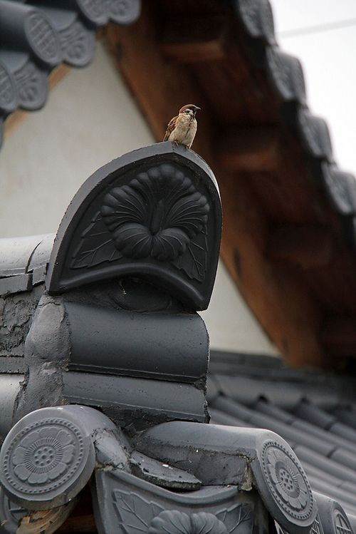 Detail of Korean roof tiles with sparrow?!  #PhotojournalismKorea