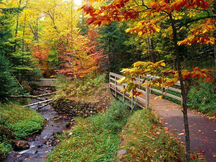 A beautiful walk in the Fall