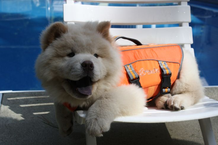 Sturdy dog life vest for safety protection in water!