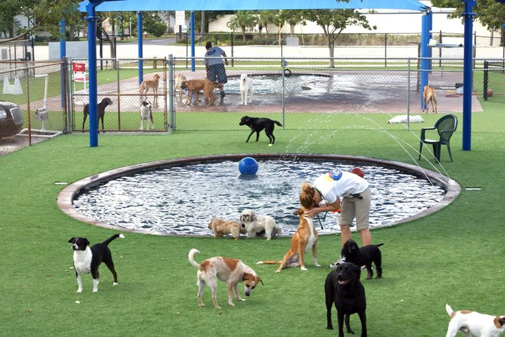 """Pompano Pet Lodge has created one-of-a-kind dog parks and pool areas, complete with experienced, well-seasoned handlers, dirt and pest free artificial NFL-style turf, water jet fountains and industrial grade cooling UV shade tents. Our in-ground, chlorine and chemical-free pools measure 24 inches in maximum depth, with shallow edges, swim-outs and water-jet fountains. Webcams and our ODOGGY app make it easy for you to view your pet at play while you're away."""