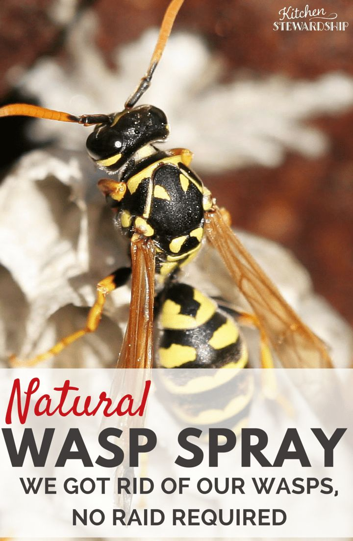 How To Get Rid Of Bee Hives Naturally