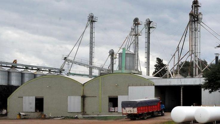 Argentina: La Justicia rechazó amparo de acopiadores contra Monsanto