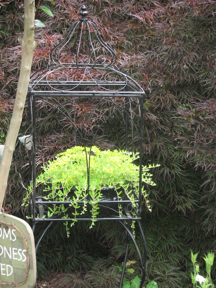Decorative bird cage with creeping sedum