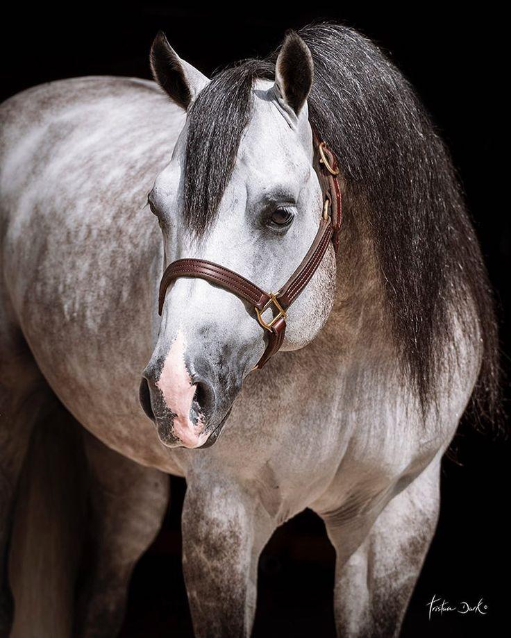 I love gray horses. So gorgeous!! ❤❤