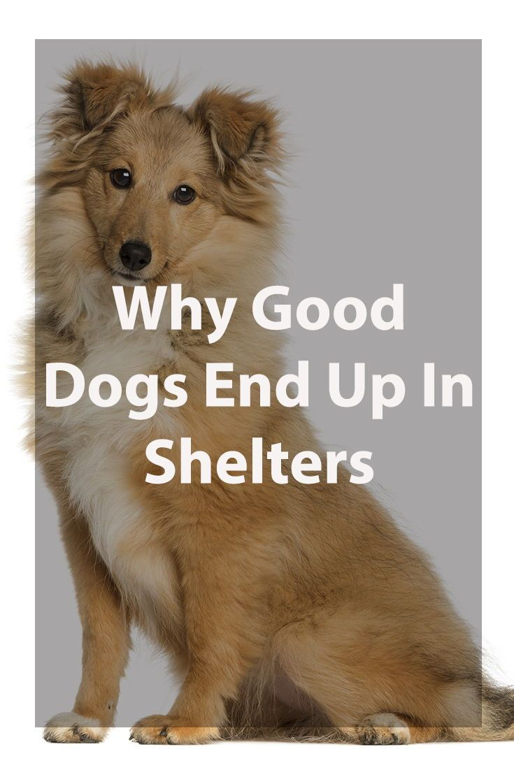 Why Good Dogs End Up In Shelters Dogs Dog Care Best Dogs