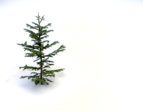*sweet*  My Charlie Brown Christmas Tree with thanks to Charles Schultz Snowy Lonely Pine Tree