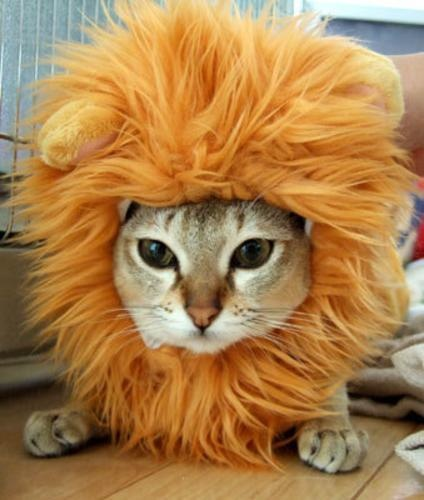 the real Lion