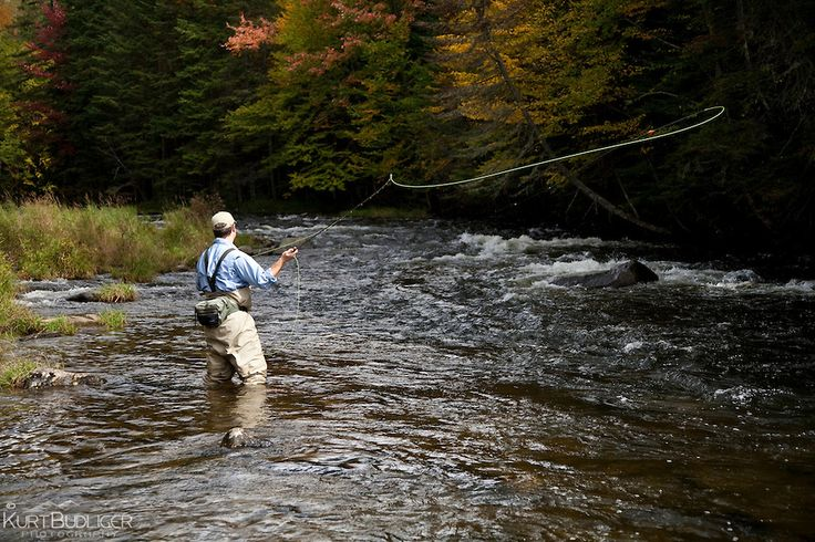 45 best connecticut images on pinterest 50 states birds for Best trout fishing in ct