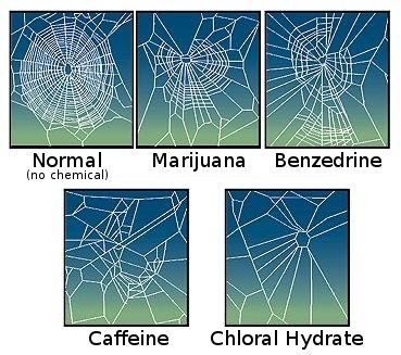 Effects of drugs on spider web construction.   interesting