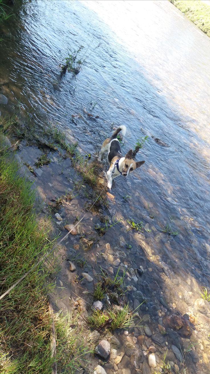 Hunde Foto: Nadine und Jimmy - Ich fliege durchs Wasser😃 Hier Dein Bild hochladen: http://ichliebehunde.com/hund-des-tages  #hund #hunde #hundebild #hundebilder #dog #dogs #dogfun  #dogpic #dogpictures