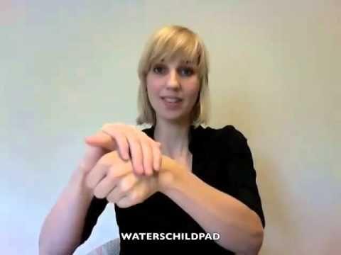 Dieren in Nederlandse gebarentaal. - YouTube