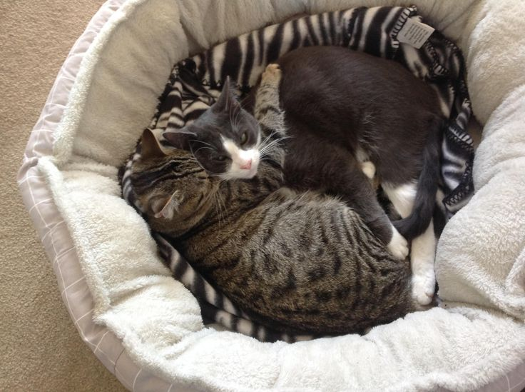 Cuddle bed.