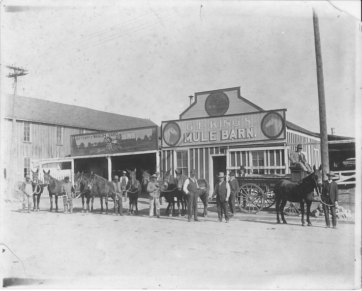 Mules at G.E. King's Mule Barn - Taylor, TX  (unknown date)