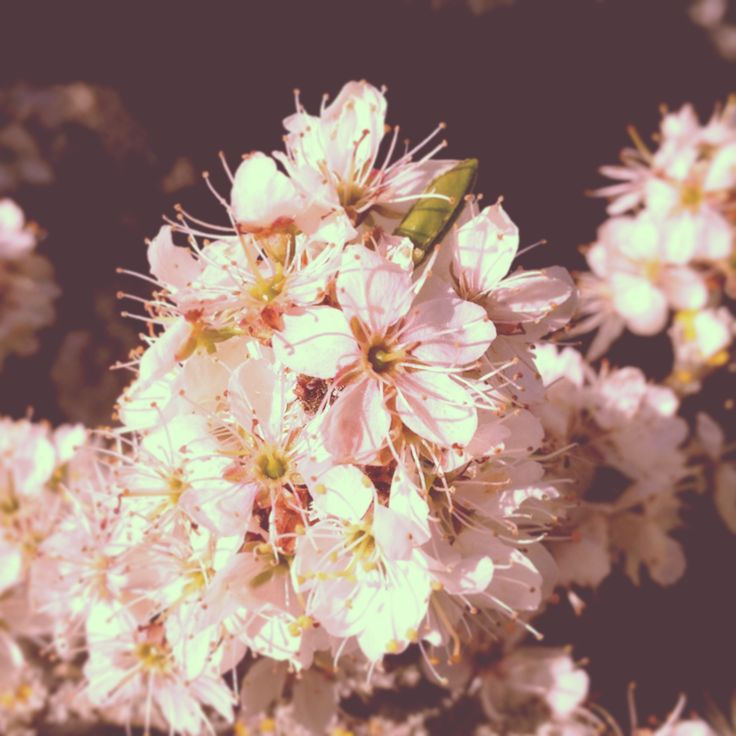 """""""A flower cannot blossom without sunshine, and man cannot live without love."""" -Max Muller"""