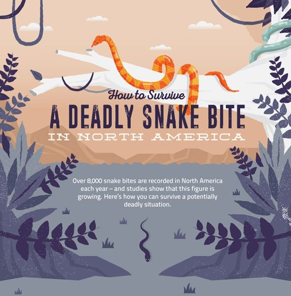 """How To Survive a Deadly Snake Bite Homesteading  - The Homestead Survival .Com     """"Please Share This Pin"""""""