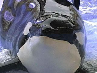 Thank you, Tilikum, for changing the world. RIP, sweet soul.