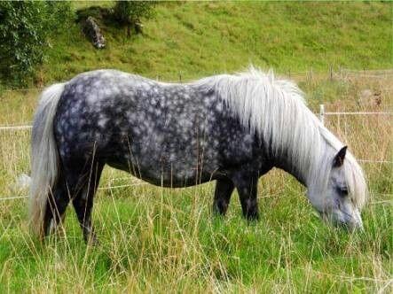 Ob Pony - Russia