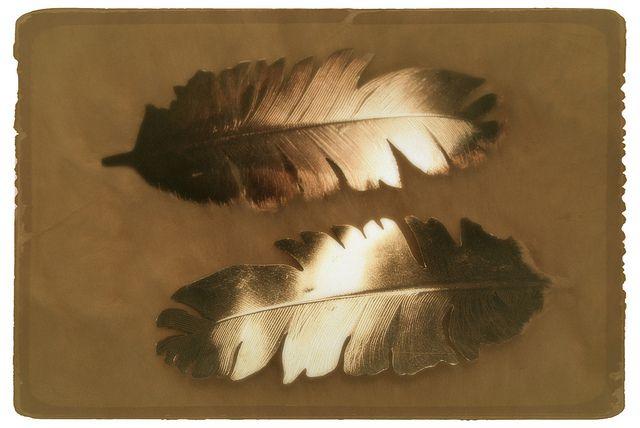 Riekonsulat - Ptarmigan feathers by Paarma Design, via Flickr