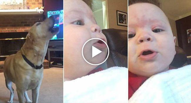 Bebé De 5 Meses Vê Cães a Uivar e Tenta Imitar, Numa Adorável Competição de Uivos