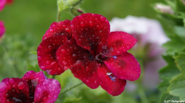 Natuurfotografie - Op een regenachtige dag..