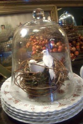 birds in nest cloche