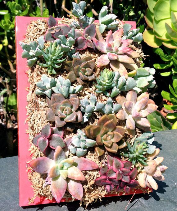 Vertical Living Succulent Wall Hanging Or Table Top In Hot Pink