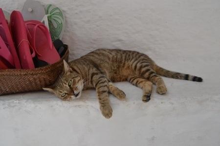 Ios Cat